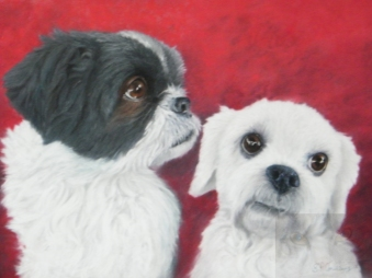 ellie & Darcy watermarked