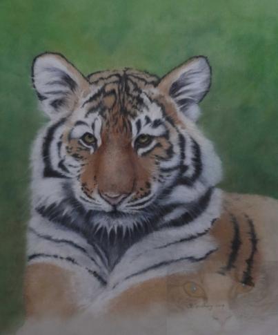 tiger cub watermarked